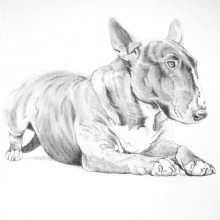 Bull Terrier Print by Meriel Burden