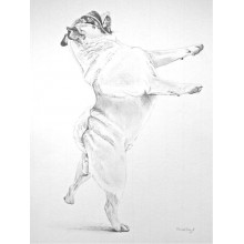 Dancing Pug Print by Meriel Burden