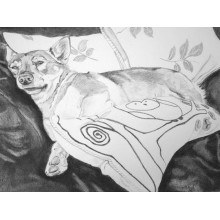 Swedish Vallhund Print by Meriel Burden