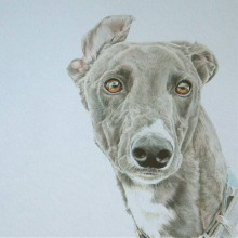 Dog Portraits & Prints