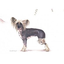 Chinese Crested Dog Print by Meriel Burden