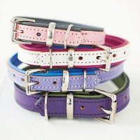Padded Leather Buckle Collars