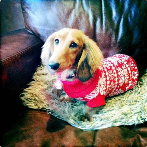 Traditional Nordic Fairisle Knitted Festive Dog Jumper | Doggielicious